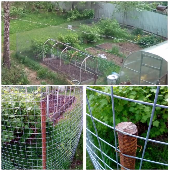ограда забор от собаки