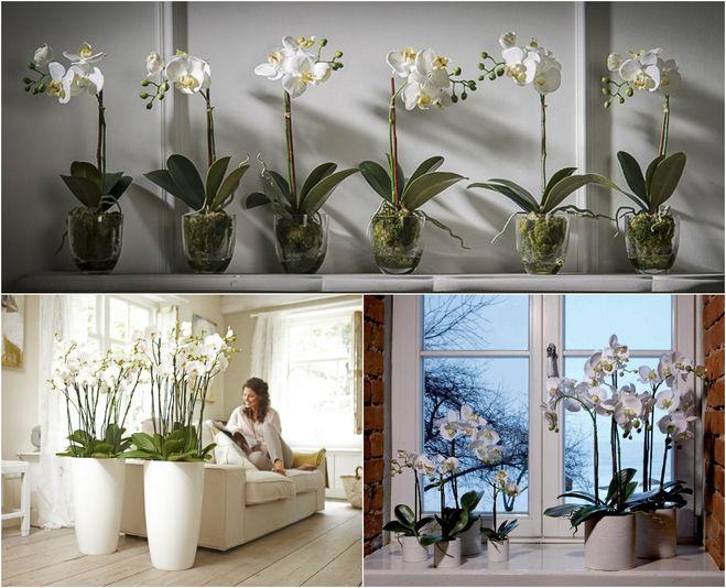 искусственные цветы-экзоты в интерьере