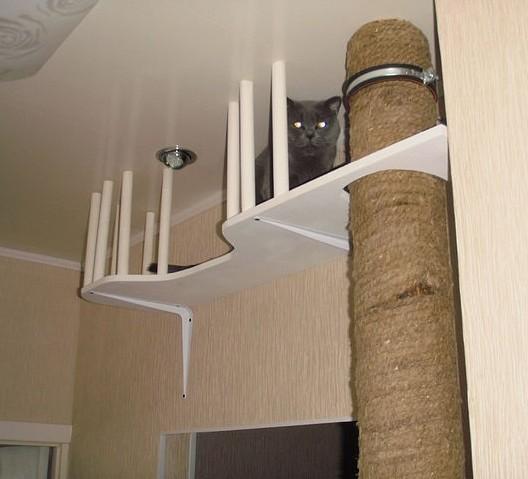 Лазанья для кошки своими руками 9