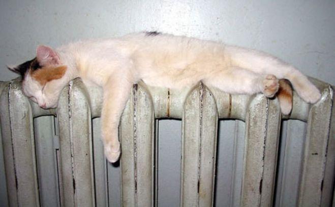 всем тепла. )